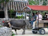Buffalo Pulling Cart Riding Tour in Hoi An