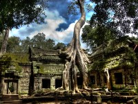 Day 1: Arrival at Siem Reap – Ta Prohm