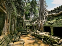 Day 6: Siem Reap - Visit Ta Prohm Temple (B/L)
