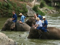 Day 11: Elephant Conservation Center (B/L)