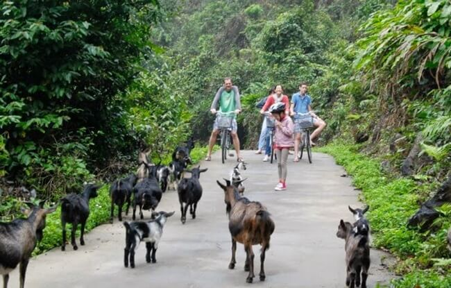 things to do in halong7