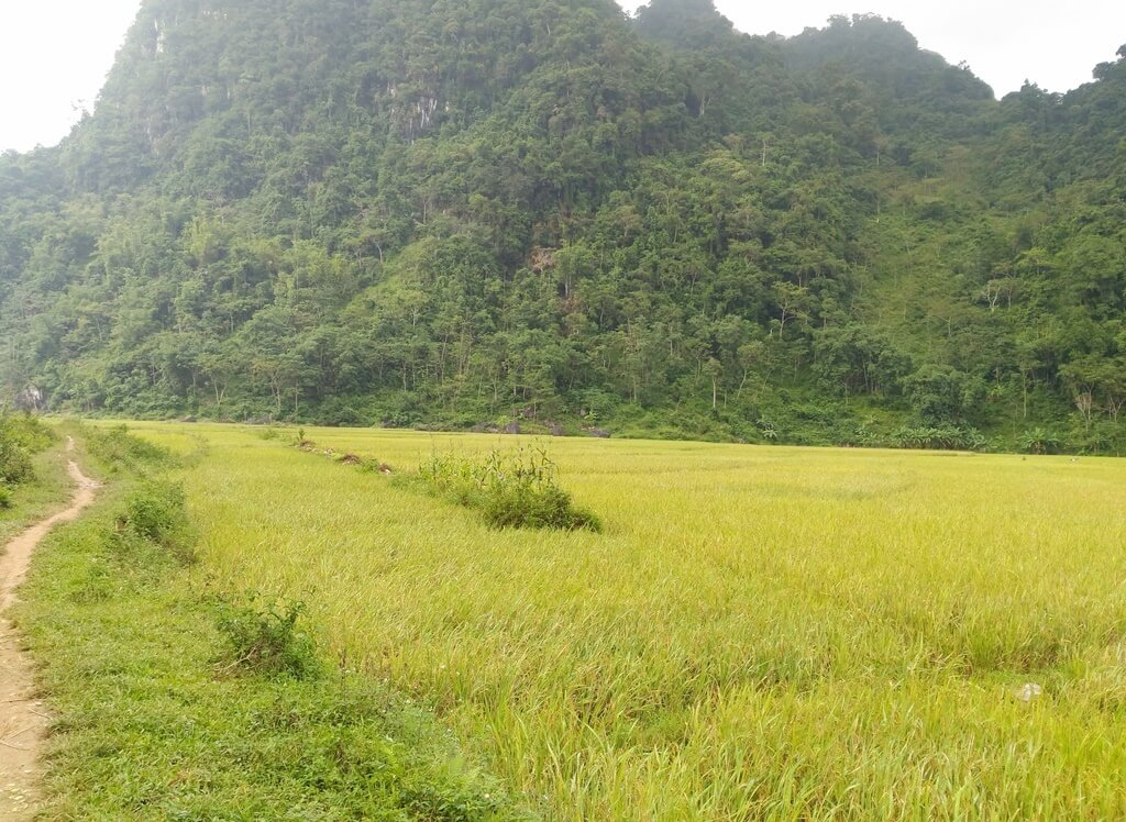 Pu Luong Trekking in 2 Days with Stay at Pu Luong Retreat