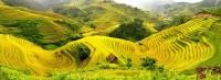 Mu Cang Chai – An Alluring Destination in the Northern Region