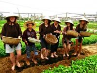 Tra Que Organic Village – A Corner of Vietnamese Farming Culture