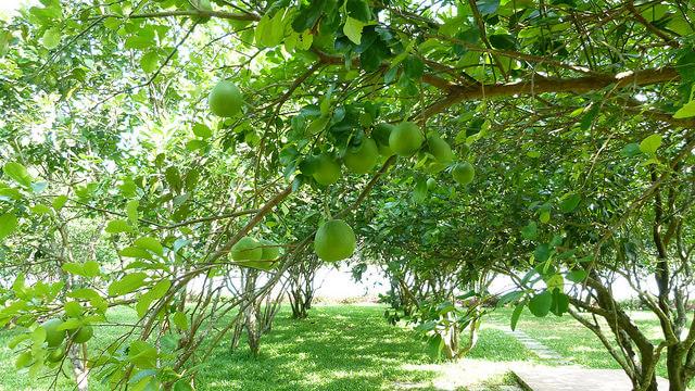 Thuy Bieu Eco Village 4