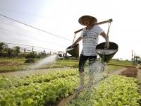 Day 8: Hoian - Tra Que Vegetable village (B/L)