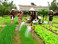 Day 3: Tra Que Village - Hoian Sightseeing (B,L)