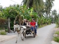 Mekong Delta Adventure ● Boat Trip & Horse Cart Riding